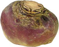 Steckruebe